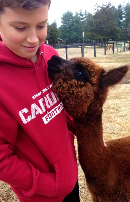 Alpaca with Boy