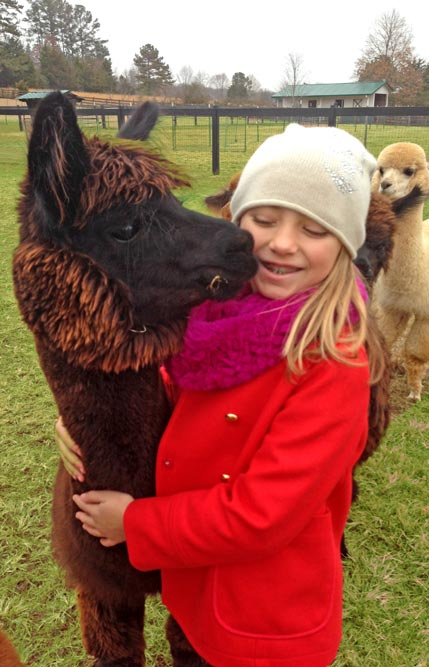 Alpaca with Girl